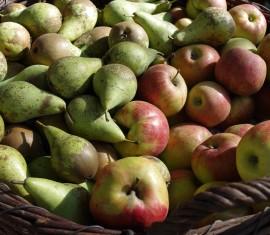 Как правильно посадить яблоню и грушу весной: правила, расстояния, способы