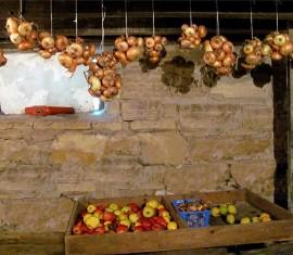 Секреты хранения яблок на зиму в погребе и подвале
