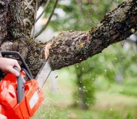 Обрабатываем спилы: чем замазать обрезанные ветки яблони без последствий