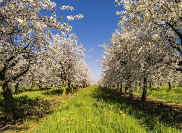 Как сохранить купленные осенью саженцы до посадки весной: храним дома и на улице