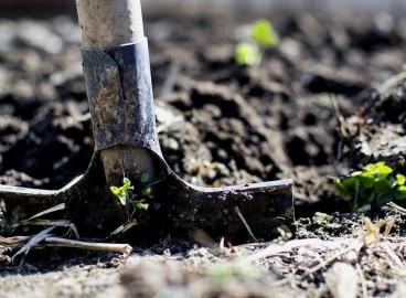 Как правильно подготовить почву и посадочную яму для яблони