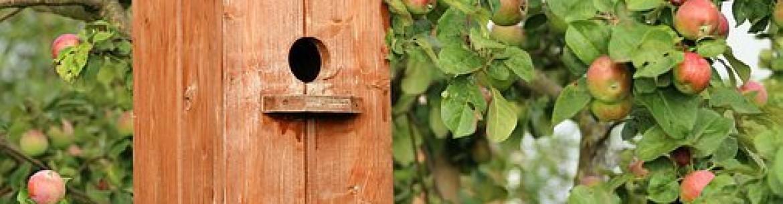 Можно ли бросать в компостную яму яблоки: опавшие, гнилые, свежие