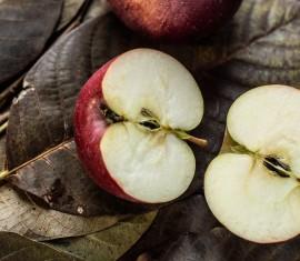 Своими руками: как вырастить саженец яблони из семечки