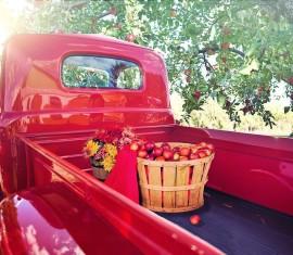 Уход за яблоней осенью – 10 обязательных этапов