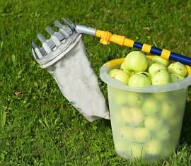 Плодосъемник для яблок своими руками: 5 идей из подручных средств