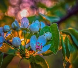 Как выбрать саженец яблони для посадки весной или осенью
