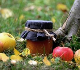 Посадка яблони осенью и правильный уход за ней: лучшее время, технология работ и важные рекомендации