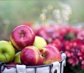 Как сохранить яблоки на зиму в домашних условиях: советы по хранению урожая до весны