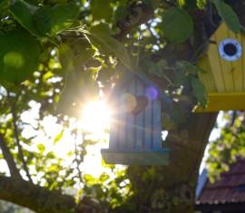 Прививка яблони осенью для начинающих: сроки, правила, способы