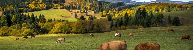 Коровяк – лучшее удобрение для плодовых деревьев и других растений: состав, растворы, правила подкормки