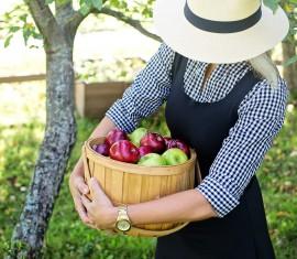 Сколько раз и на какой год после посадки плодоносит яблоня