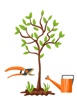Яблоня Гирлянда: особенности сорта и ухода