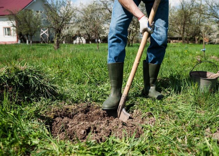 копаем яму для дерева