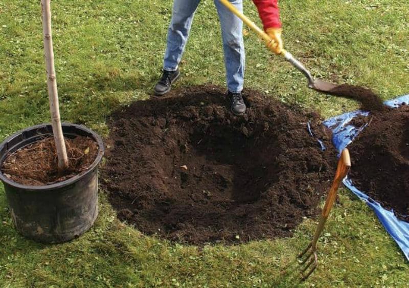 Подготовленная яма для саженца