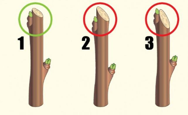 Что делать с волчками на яблоне: избавиться или перепривить?