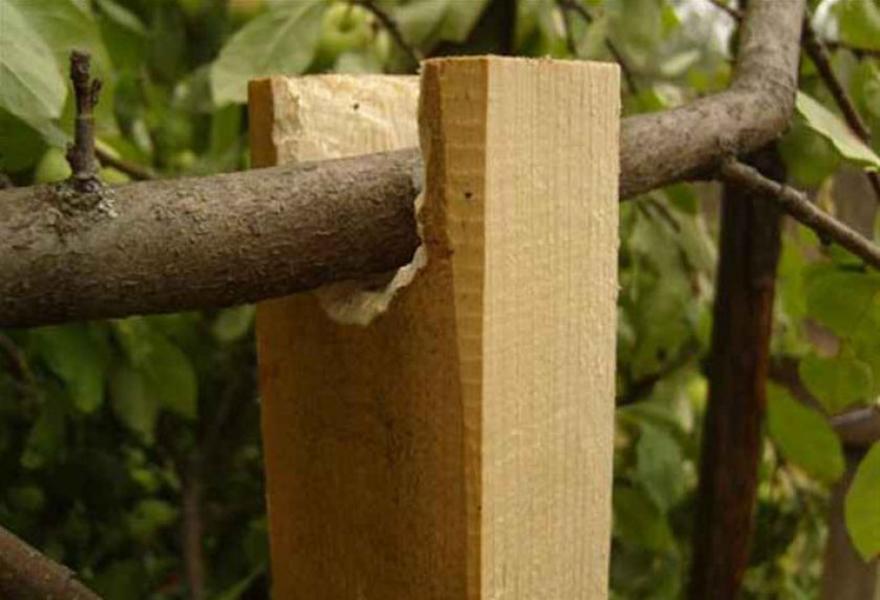 Что делать, если сломалась ветка у яблони: восстанавливаем, укрепляем, замазываем