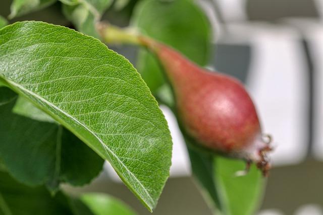 Правила ухода за яблоней круглый год. Секреты хорошего урожая