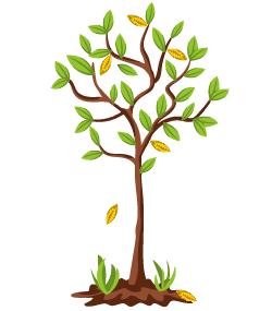 Мучнистая роса на яблоне: как бороться с заболеванием и чем обработать деревья в саду