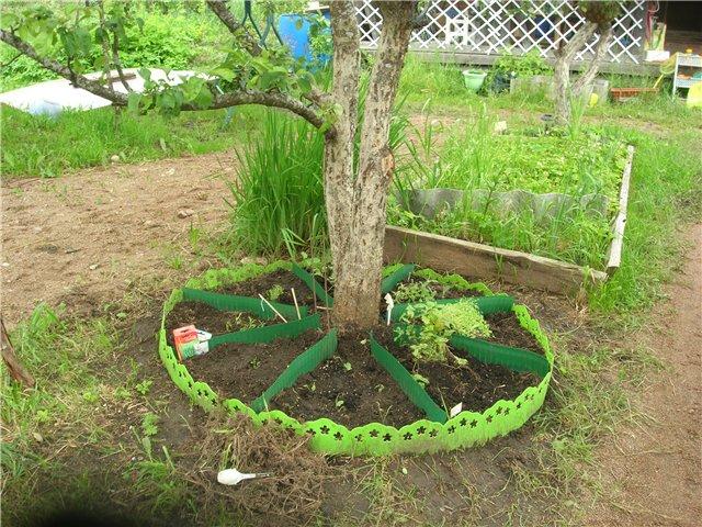 Что можно посадить под яблоней в тени: 5 причин использовать приствольный круг